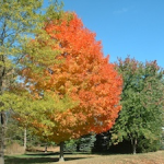 Thumbnail image for Fall Celebrations at AACLC