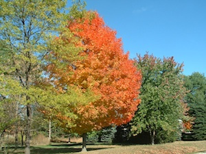 Post image for Fall Celebrations at AACLC